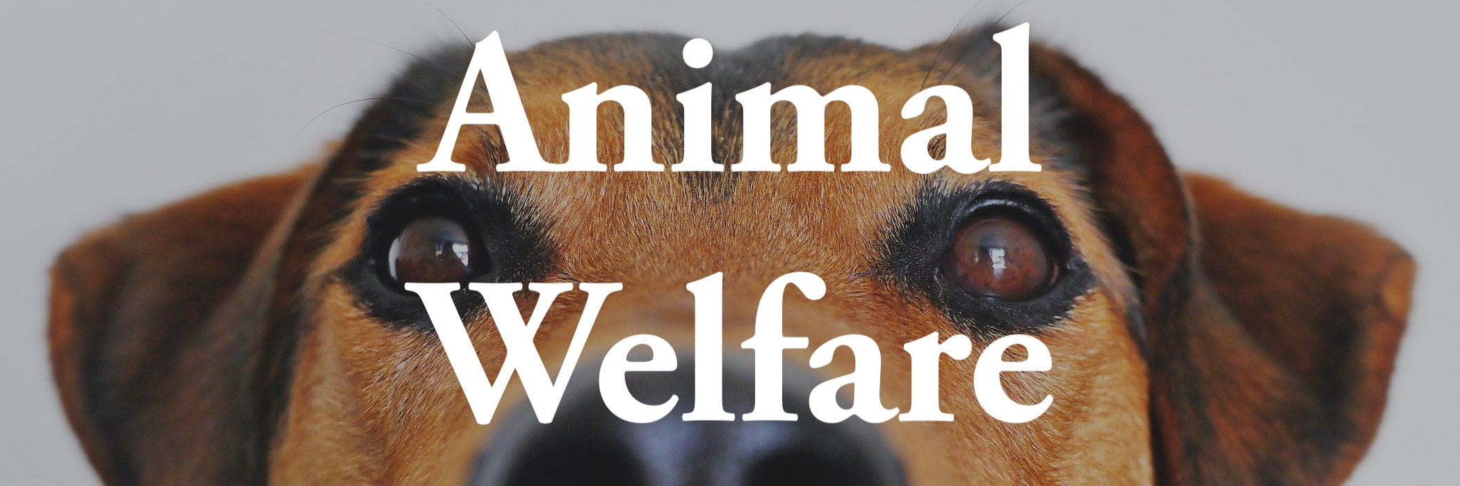 Animal welfare picture of a dog