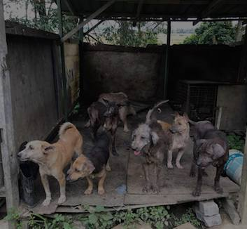Picture of dogs in CARES (Companion Animal Rescue Effort Society JB) animal shelter